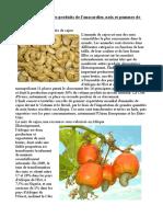 La-transformation-des-produits-de-lanacardier-noix-et-pommes-de-cajou-en-Afrique.pdf