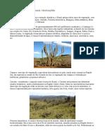 aula 06 1 ano 2 bim  vegetação Brasil.docx