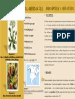 Ficha tecnica Planta Carnivora