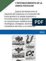 Puerperio y Dinámica Folicular