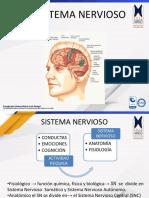 Neuroanatomía estructural y funcional del sistema nervioso Unidad 2 (Recurso) (1).pdf