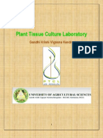 PTCL redy Anthurium