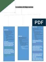 Organizador grafico 2