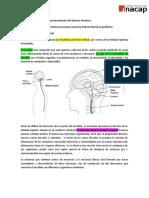Funciones del Sistema Nervioso Central y Periférico (2).doc