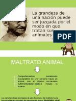 taller maltrato animal.pptx
