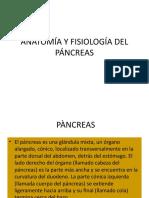 3. ANATOMÍA Y FISIOLOGÍA DEL PÁNCREAS