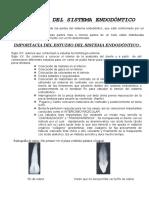 ANATOMIA DEL SISTEMA ENDODÓNTICO.doc