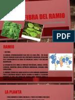 RAMIO EXPOCICION - LUZ IRENE CHACON GOMEZ