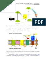 Fisiologia_Vegetal_Aspectos_basicos-3