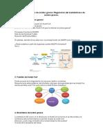 Tema 14 - Síntesis de ácidos grasos Regulación del metabolismo de ácidos grasos.