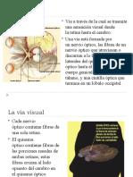 La_via_visual.pptx