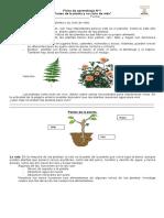 Ficha de aprendizaje N°1 partes de la planta y su ciclo