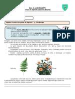 Ficha de aprendizaje N°1 partes de la planta y su ciclo okis