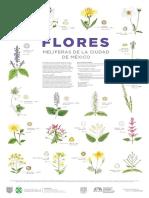 CARTEL - Flora Melífera de la Ciudad de México