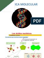 ACIDOS NUCLEICOSa.v (1).pptx