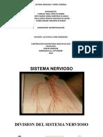 DIAPOSITIVAS SISTEMA NERVIOSO Y DAÑO CEREBRAL (1)liliana