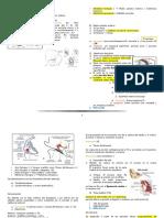 Anatomia_y_embriologia_del_oido 2.docx