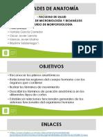 Generalidades-Anatomía
