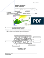 WORKSHEET 6.7 Photosynthesis- Leaf Structure(New)