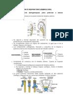 361434632-Sistema-Respiratorio-Embriologia.docx