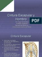 Cintura Escapular y Hombro1