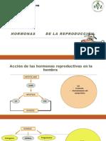 HORMONAS DE LA REPRODUCCIÓN (1)