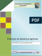 Práctica 1- Plastidios.docx botanica