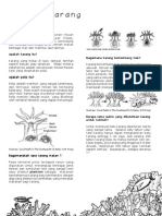 Fact Sheet Terumbu Karang