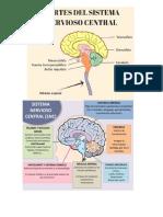 Qué es Sistema nervioso