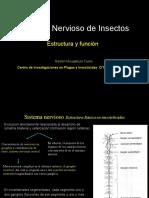 Sistema Nervioso Insectos y toxicología. 2011. Gastón Mougabure Cueto