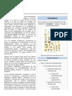 Champignon wiki