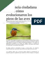 La ciencia ciudadana revela cómo evolucionaron los picos de las aves