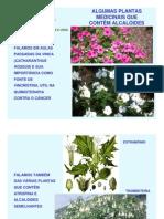 Plantas medicinais3 USP