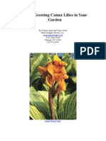 Growing Canna Lilies in your garden