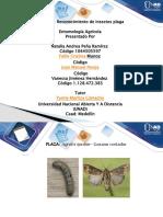 reconocimiento de insectos presentacion (4) (4)-2 (1)