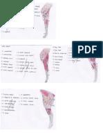 anatomia veterinaria apuntes 2