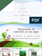 Mecanismo de nutrición en las algas.pptx
