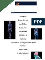 Anatomía y Fisiología del Sistema Nervioso 1