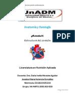 Actividad 2. Estructura cardiaca..pdf