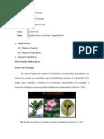FUNCIONES DE LOS ALCALOIDES_FORO2_3P