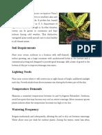 The croton plants