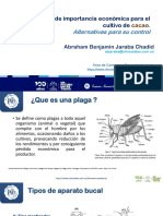Nal de Chocolates - Ing. Abraham Jaraba. Plagas de importancia económica para el cultivo de cacao. Alternativas para su control (12.06.2020)