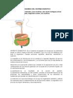 BIOQUMICA DEL SISTEMA DIGESTIVO biologia.