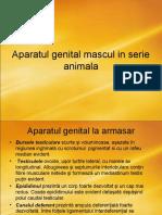 Aparatul genital mascul in serie animala