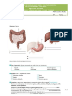 FT_3_Sistema digestivo