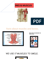 MUSCLES AND BONES.pptx
