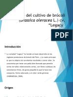 DIAPOS DE BROCOLI