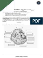 Guía de Biología_ Teoría Celular y organelos Nombre_ Curso_ Fecha_