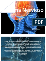 Sistema Nervioso Anatomia[1]