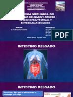 Tema 6. ANATOMIA QUIRURGICA DEL INTESTINO DELGADO Y GRUESO.pdf